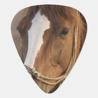 chestnut-horse-65.jpg uñeta de guitarra