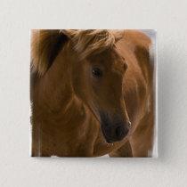Chestnut Horse Design Pin