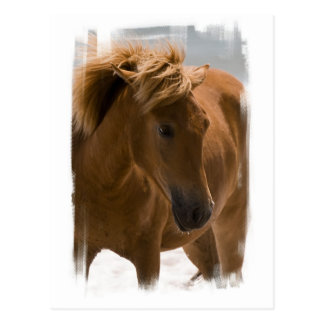 Chestnut Horse Design Postcard