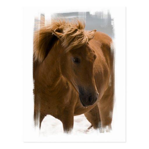 Chestnut Horse Design Postcard