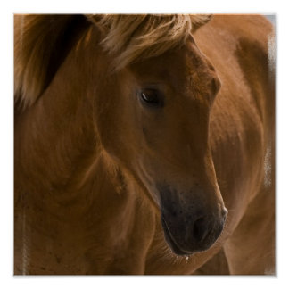 Chestnut Horse Design Print