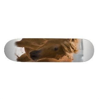 Chestnut Horse Design Skateboard