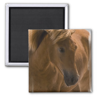 Chestnut Horse Design Square Magnet Refrigerator Magnet