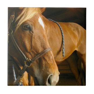 Chestnut Horse Design Tile