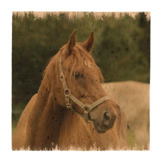 Chestnut Horse in a Field Drink Coaster
