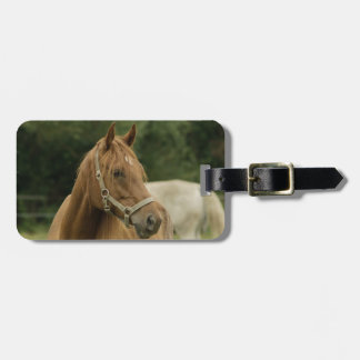 Chestnut Horse in a Field Bag Tags