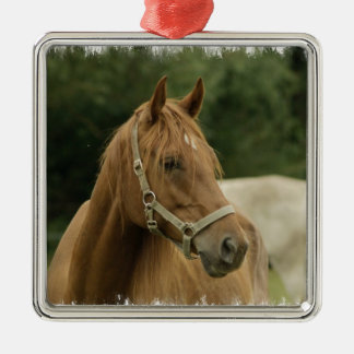 Chestnut Horse in a Field Christmas Ornaments