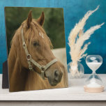 Chestnut Horse in a Field Photo Plaque