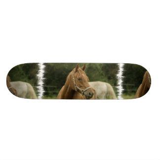 Chestnut Horse in a Field Skateboard