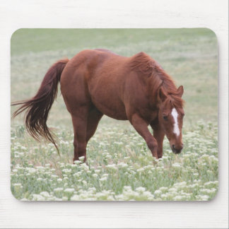 Chestnut Horse in Field Mouse Pad