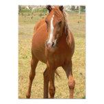 "Chestnut Horse Invitation 5"" X 7"" Invitation Card"