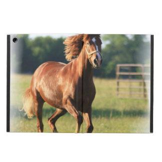Chestnut Horse Case For iPad Air