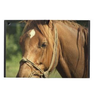 Chestnut Horse iPad Air Cover