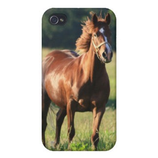 Chestnut Horse iPhone Case Covers For iPhone 4
