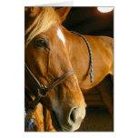 Chestnut Horse Photo Greeting Card