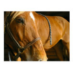 Chestnut Horse Photo Postcard