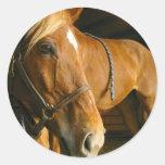Chestnut Horse Photo Stickers
