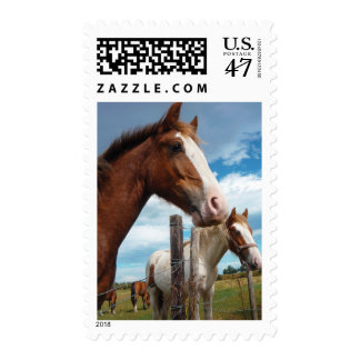 Chestnut Horse Photograph - Medium Postage