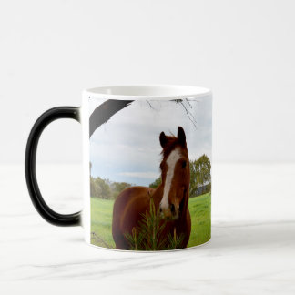 Chestnut Horse Sniffing A Banksia Tree, Magic Mug
