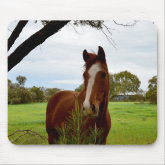 Chestnut Horse Sniffing A Banksia Tree, Mouse Pad