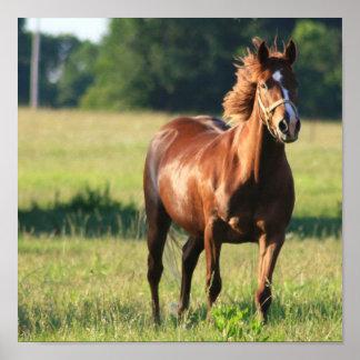 Chestnut Horse Standing Canvas Print