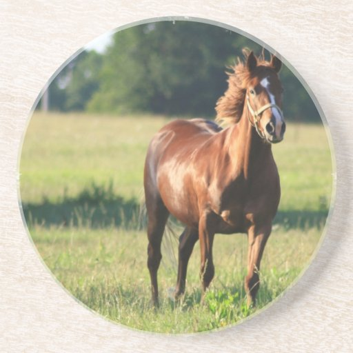 Chestnut Horse Standing Coasters