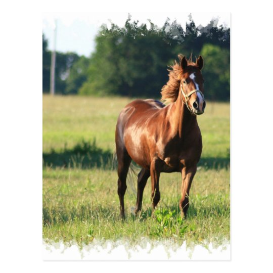 Chestnut Horse Standing Postcard