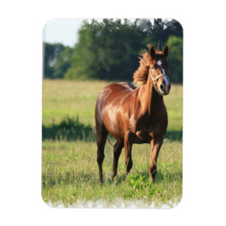 Chestnut Horse Standing Premium Magnet Rectangle Magnets