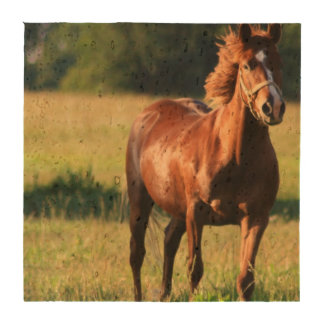 Chestnut Horse Standing Coaster