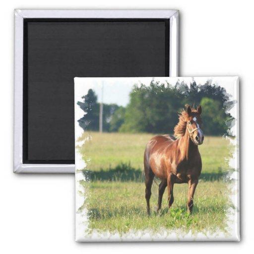 Chestnut Horse Standing Square Magnet Refrigerator Magnet