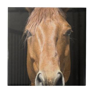 Chestnut Horse Tile