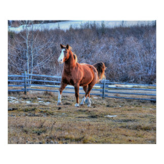 Chestnut Horse Trotting up a Hill Photo Poster