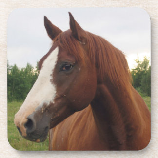 Chestnut Horse with Blaze Coasters