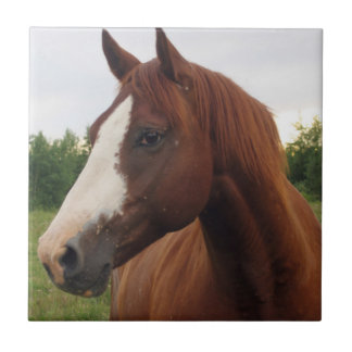 Chestnut Horse with Blaze Tile