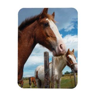 Chestnut Horse with White Blaze & Friends Magnet