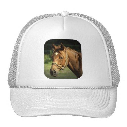 Chestnut Pony Baseball Hat
