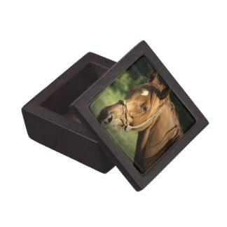 Chestnut Pony Premium Gift Box
