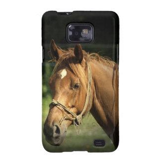 Chestnut Pony Samsung Galaxy Case Galaxy SII Case
