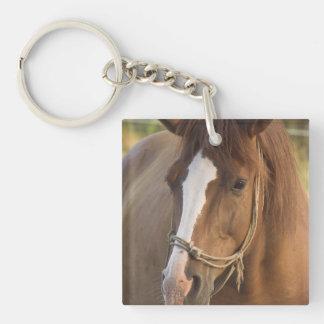 Chestnut Quarter Horse Acrylic Keychain
