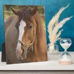 Chestnut Quarter Horse Plaque