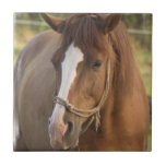 Chestnut Quarter Horse Tile