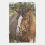 Chestnut Quarter Horse Towel