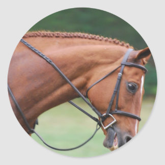 Chestnut Show Horse Stickers