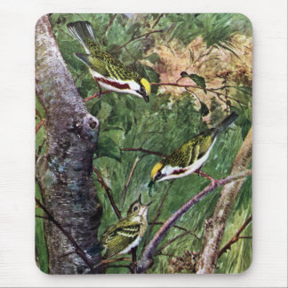 Chestnut-sided Warblers Feeding Young Mouse Pad