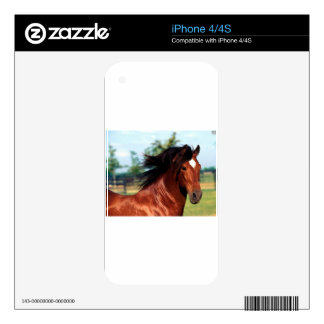 Chestnut Stallion Galloping Along A Path Skins For iPhone 4