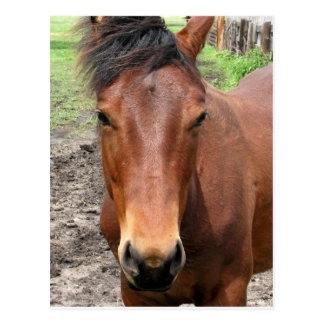 Chestnut Thoroughbred Horse Postcard