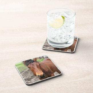 Chestnut Thoroughbred Horse Set of Coasters