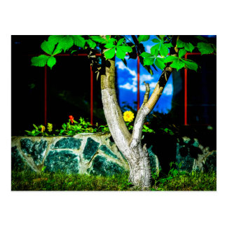 Chestnut Tree Post Cards