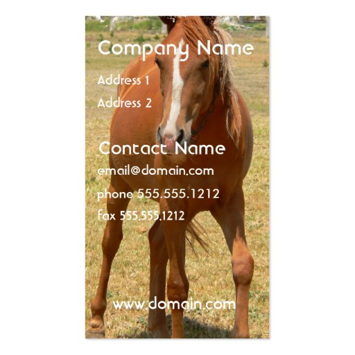Chestnut Yearling Horse Business Card