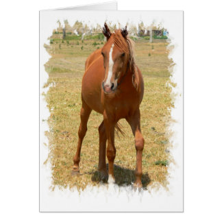 Chestnut Yearling Horse Greeting Card